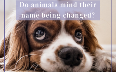 Do animals mind their name being changed?