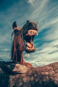 Horse communicator, Trisha Wren, Animal Communicator