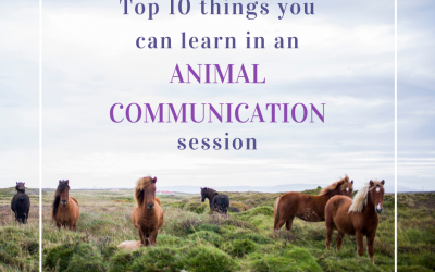 The Top 10 Things you can learn from an Animal Communication session