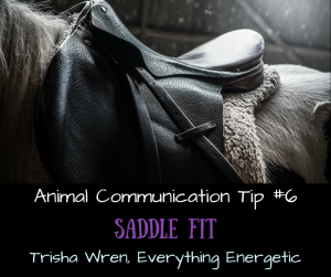 Animal Communication Tip #6, Trisha Wren, Horse Communication