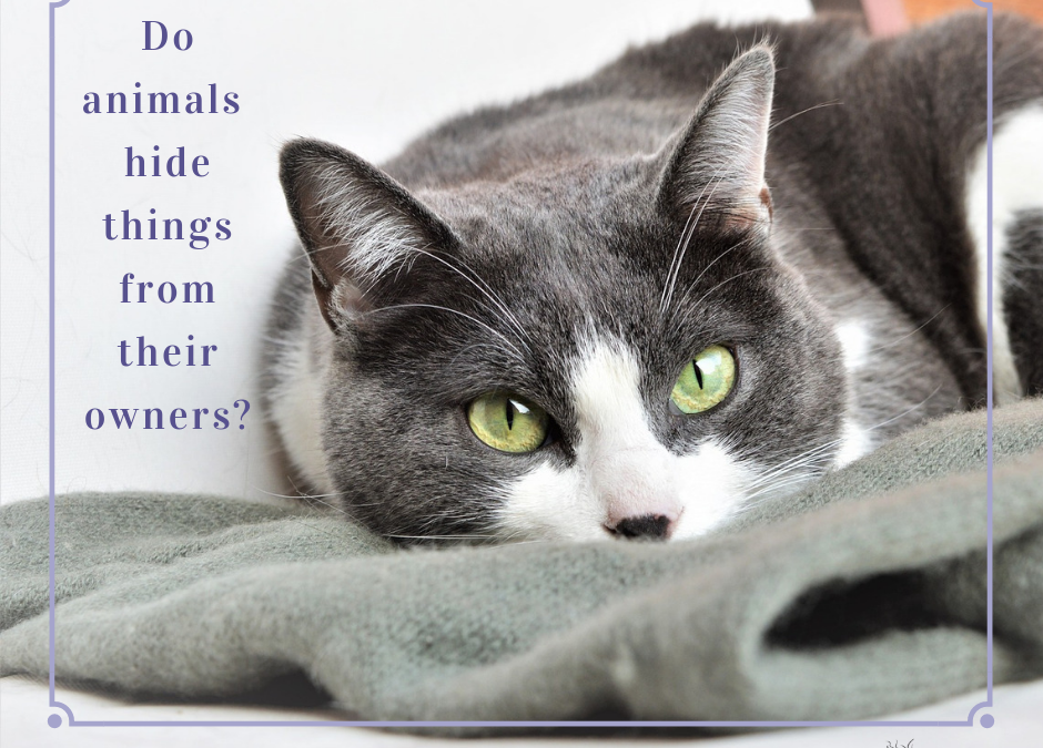 Do animals hide things from their owners?