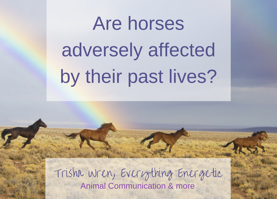 Do the past lives of horses affect them?