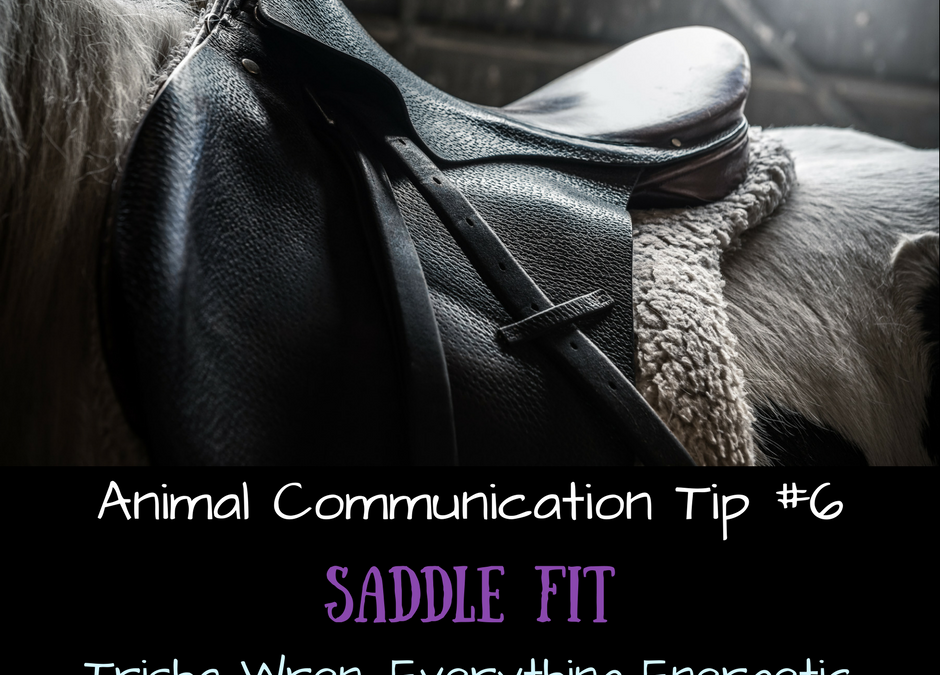 How horses communicate re saddle fit