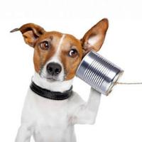 animal-communication