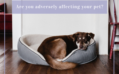 Are you adversely affecting your pet?