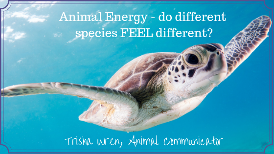 Animal energy – do different species feel different to an Animal Communicator?