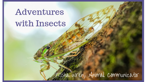 Adventures with Insects