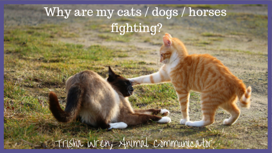 Help, my dogs / cats / horses are not getting along!